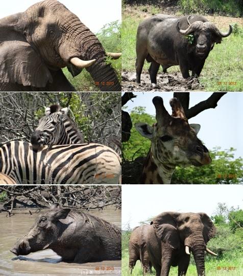 Durban-Hluhluwe Umfolozi Day Safari Tour 28 December 2013