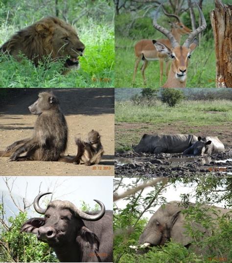 Hluhluwe Umfolozi game reserve – Durban 3 Day Safari Tour 19 -21 December 2013