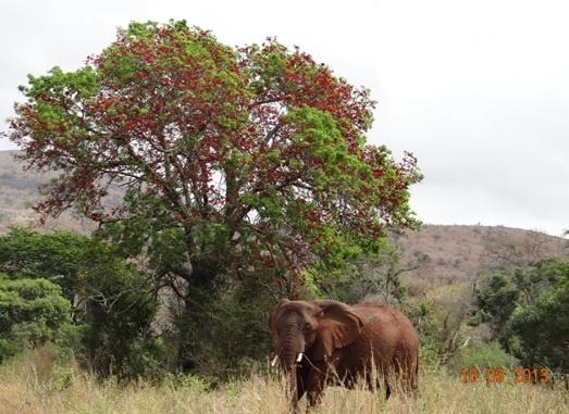 Hluhluwe Umfolozi Game reserves amazing Flora and Fauna