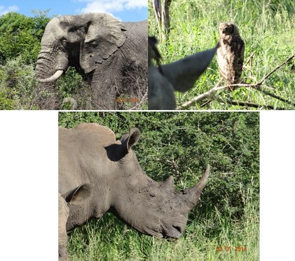 Hluhluwe Umfolozi Durban Day Safari Tour ex Richards Bay 3 Jan 2014