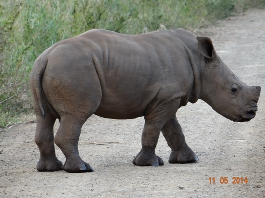 Durban 4 Day Big 5 overnight Safari Tour to Hluhluwe Umfolozi Game reserve, Emdoneni Cat Rehab centre and St Lucia Wetlands ( Isimangeliso Wetland Park) – 29th April to the 2nd May 2014.