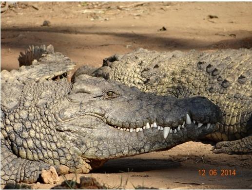 Durban Day Safari Tour to Tala game reserve, Phezulu Cultural village and Reptile park 12 June 2014