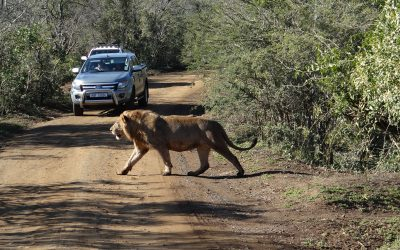 Recent African safaris from Durban