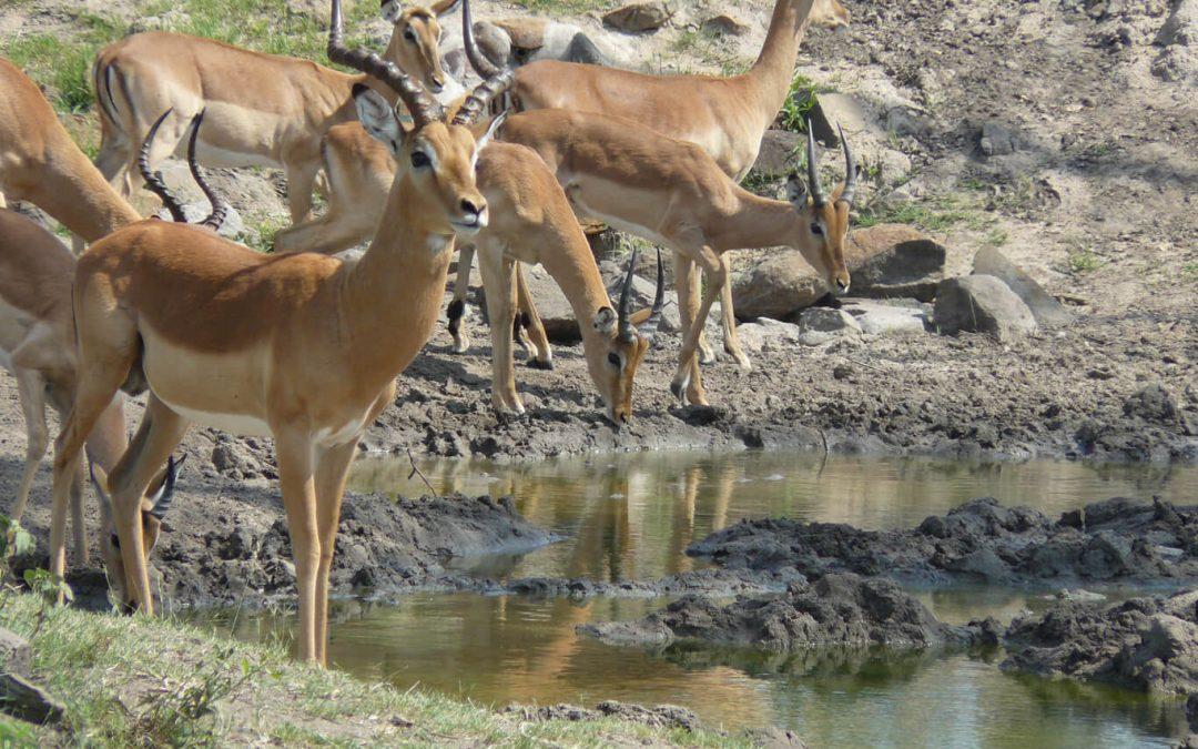 Impala : Dispelling the Myth