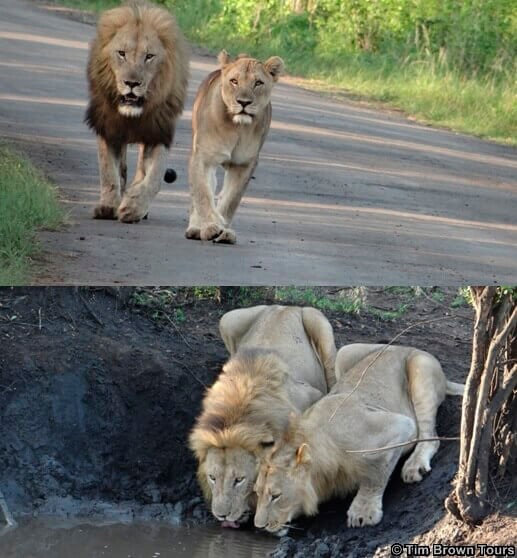 Kruger national Park Safari – what other options do you have?