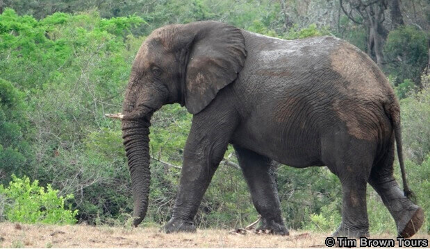 Big 5 safari Durban