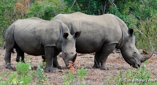 Hluhluwe Day Safari