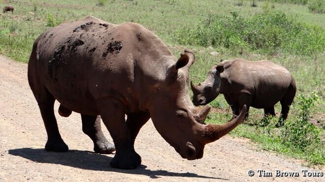Hluhluwe game reserve 4 day safari