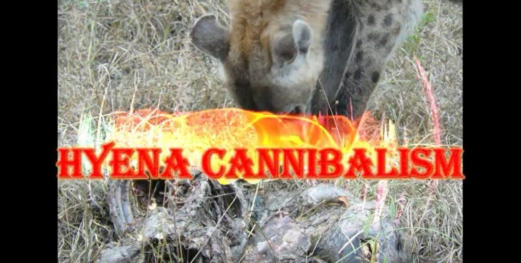 Hyena Cannibalism