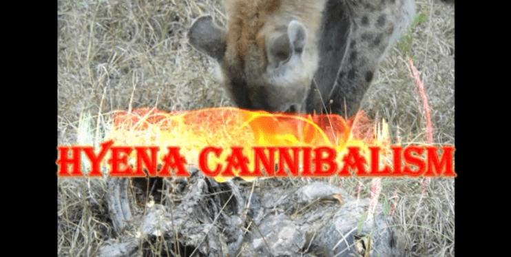 Cannibalism in nature - it is a dog eat dog world! - Tim