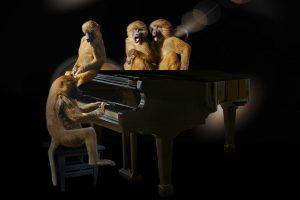 Safari and Music