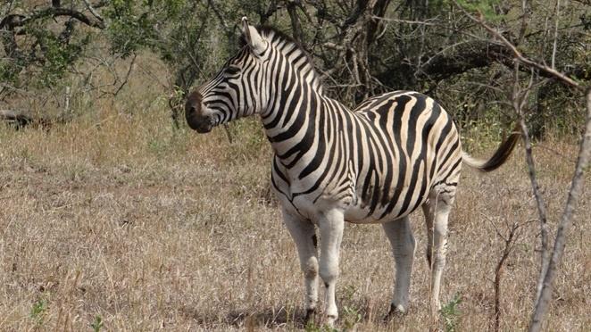 Durban day safaris