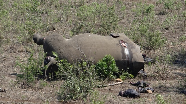 Durban Safari Tour
