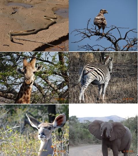 Hluhluwe Umfolozi 3 Day Safari Tour 18-20 August 2013