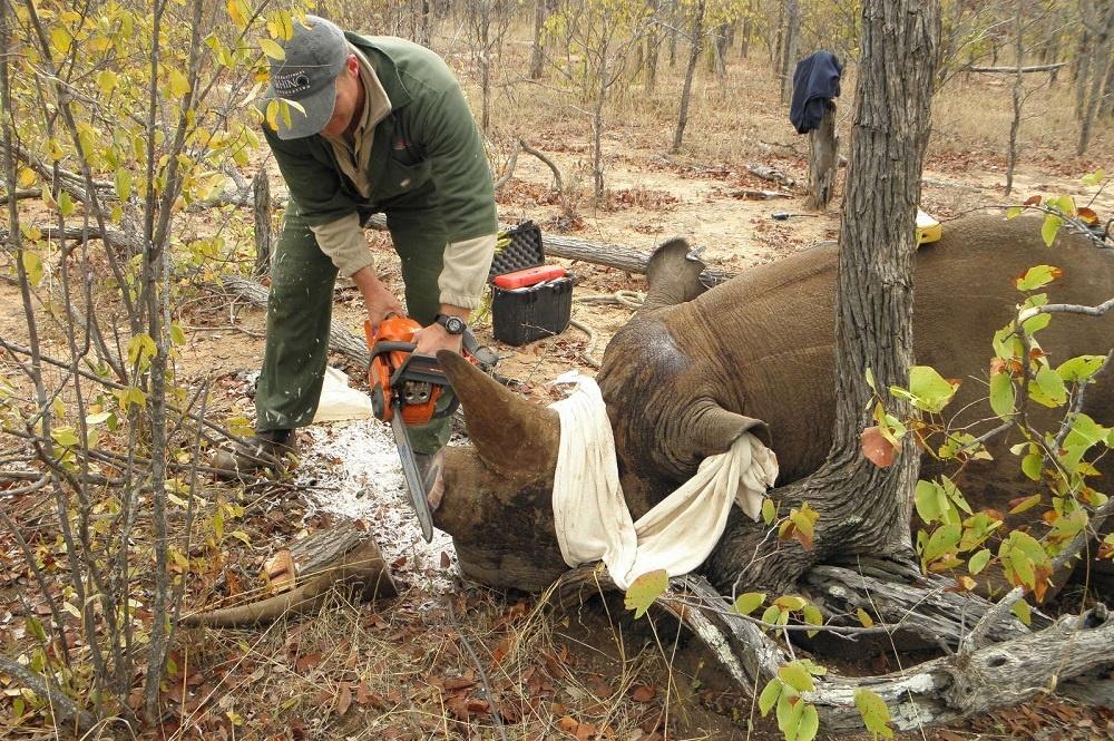 Rhino Horn as Medicine