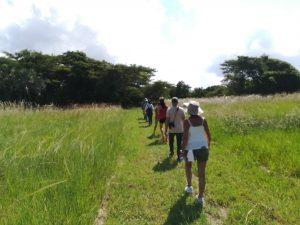 Bush Walk