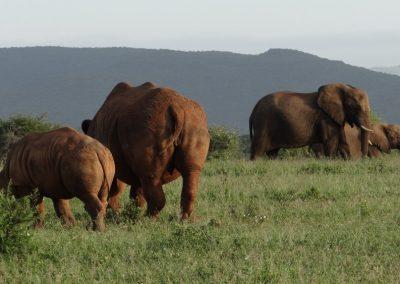 Rhino and Elephant