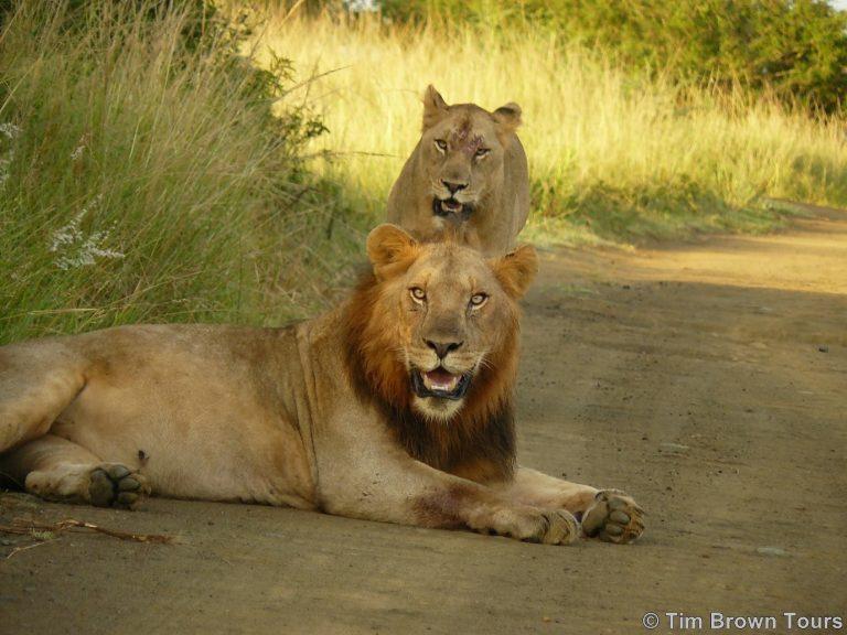corona and virtual safari